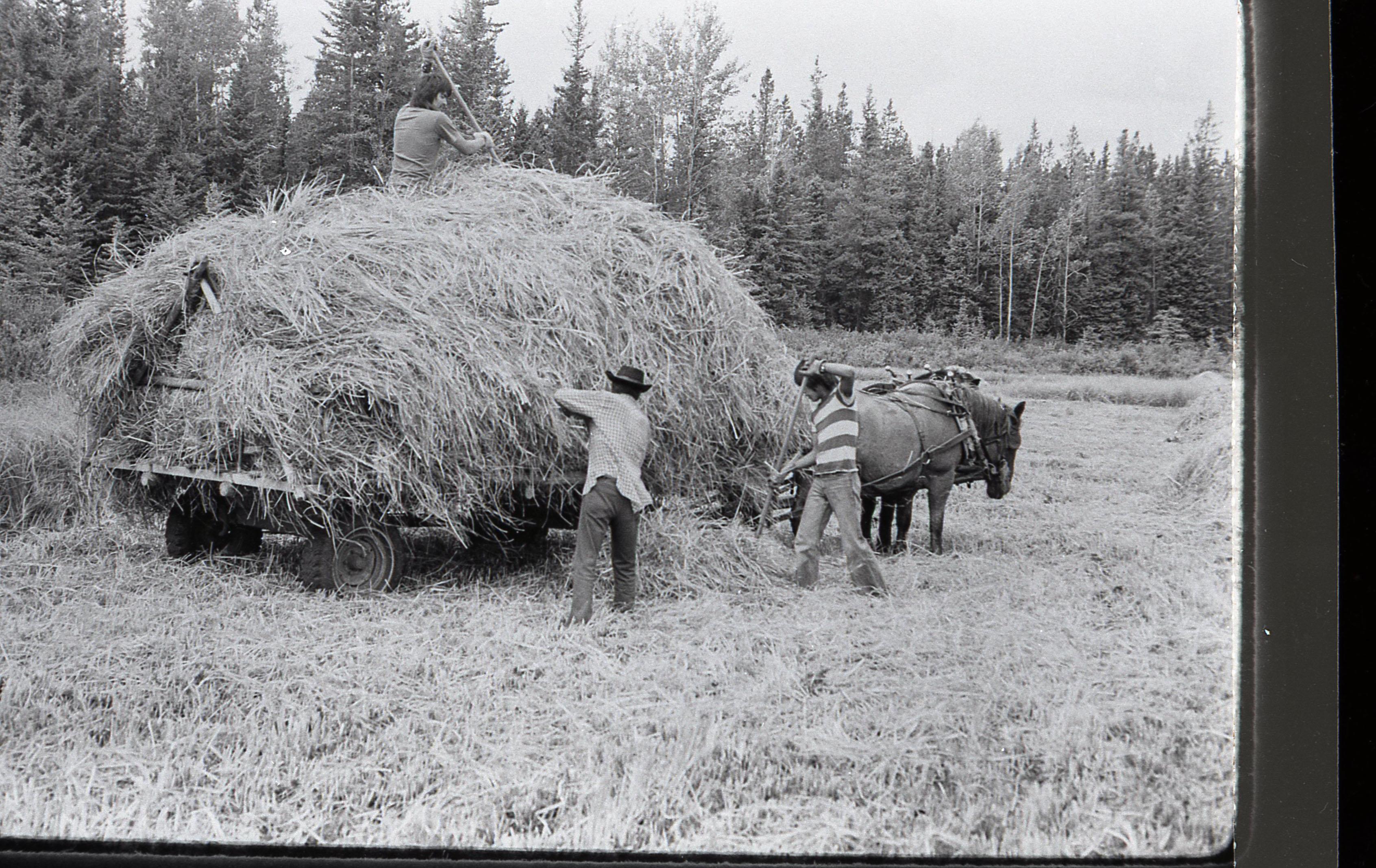 160-Making Hay
